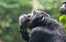 kibale_forest_national_park_010