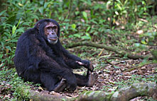 kibale_forest_national_park_016