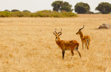 queen_elizabeth_national_park_033