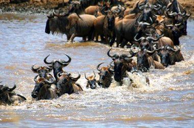 ADVENTURE AROUND KENYA AND TANZANIA