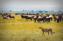 EYES ON KENYA & TANZANIA SAFARI