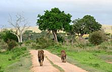 THE BEST OF KENYA & TANZANIA SAFARI